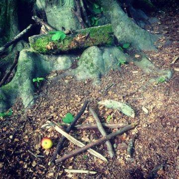 Afbeelding met boom, buiten, stof Automatisch gegenereerde beschrijving